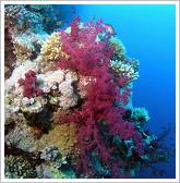Ras Mohammed National Park - Coral reef