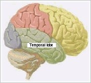 Depiction of brain with temporal lobe