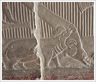 Tomb of Mereruka in Saqqara, (c) Flop Eared Mule